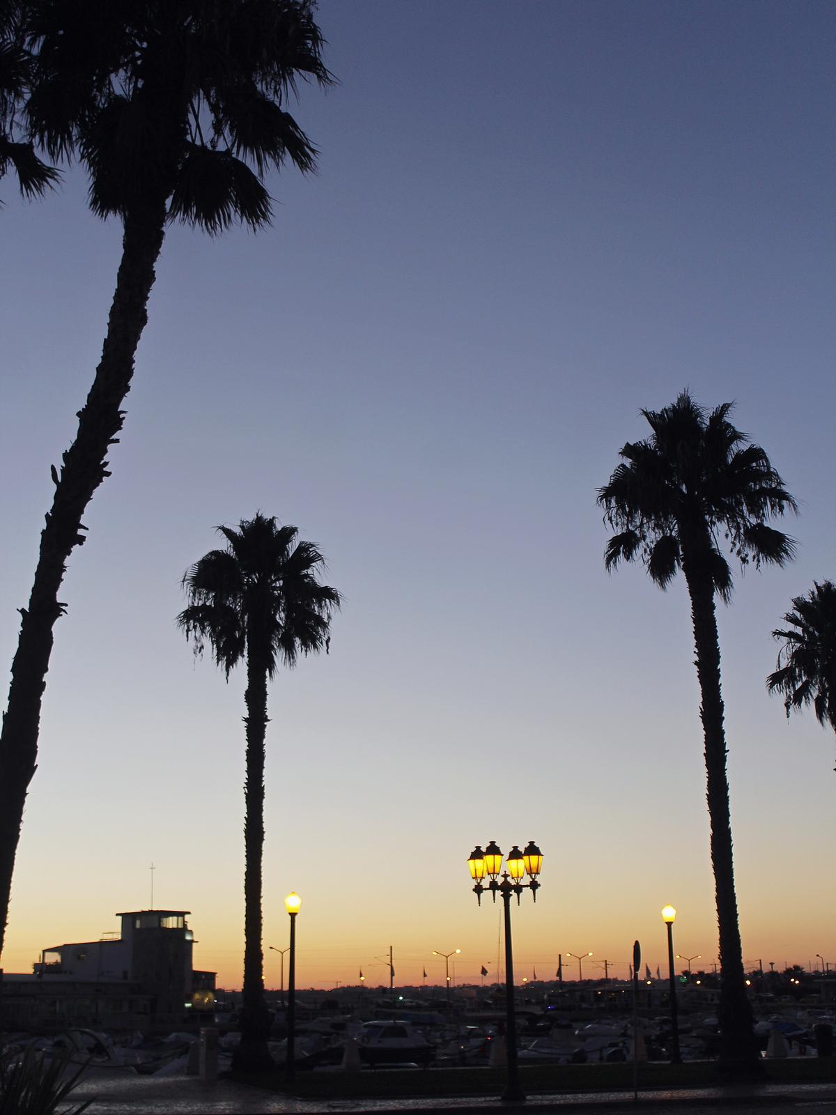 faro - port - plamtrees - palmiers - portugal